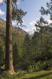 Monte Rotondo above pines